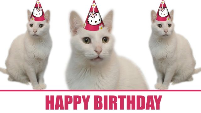 Top Birthday Cat Memes