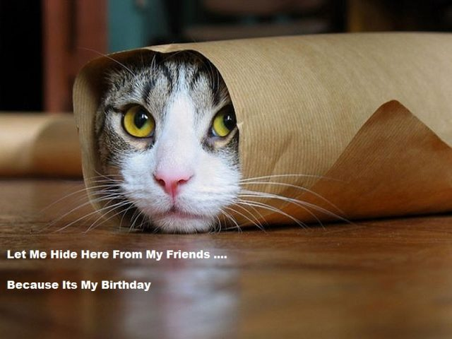 Funny Cat Birthday Meme : Top birthday cat memes images and gif happy birthday