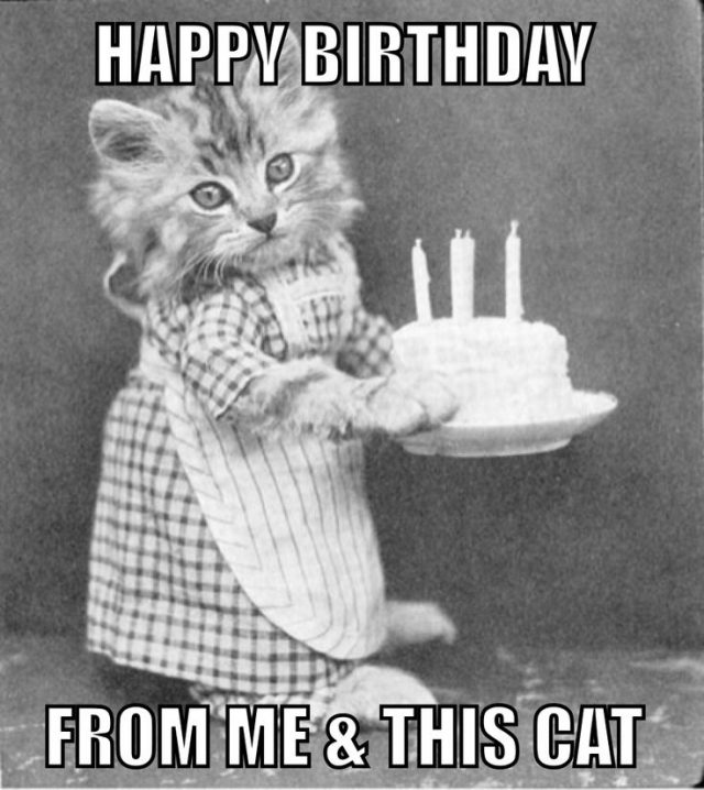 Top Birthday Cat Memes Images And Gif 9 Happy Birthday