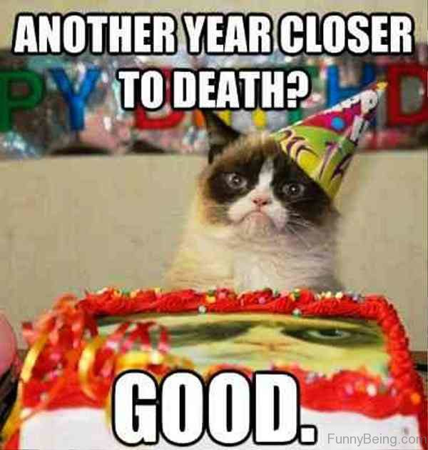 Birthday Funny Meme – angry cat