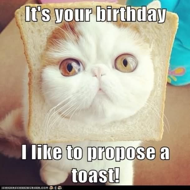 Birthday Funny Meme – kitten